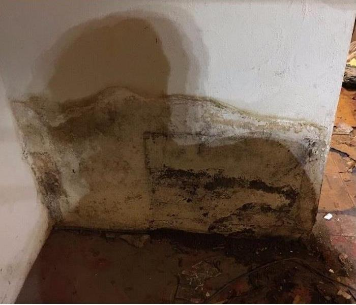 Mold Remediation Required Following Water Damage