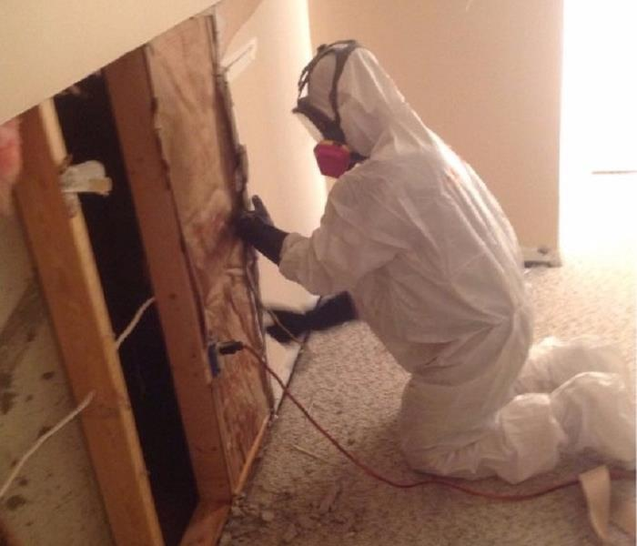 Mold Remediation in Cincinnati, Ohio