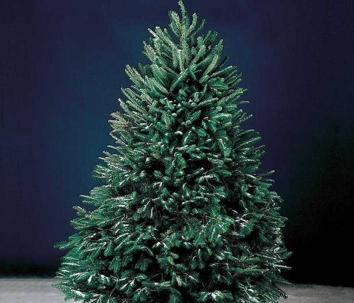 Commercial Christmas Trees & Mold - Did you know...?